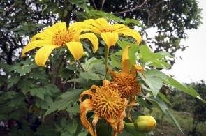 fuana-flora-4