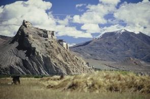 tibet-x-19