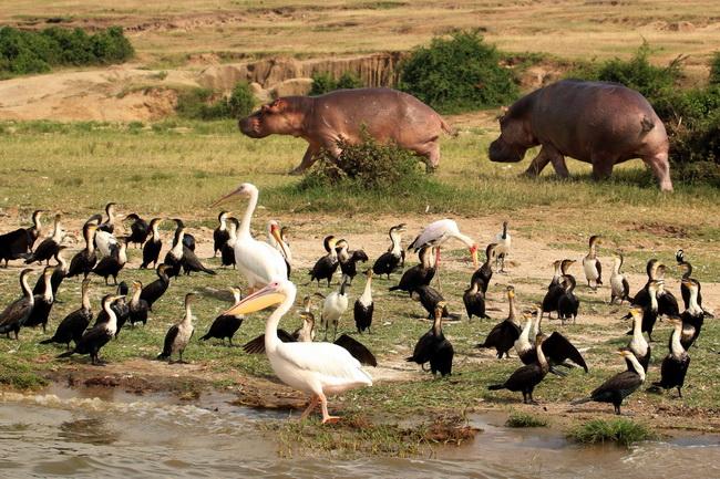 טיול לאוגנדה - תעלת קזינגה