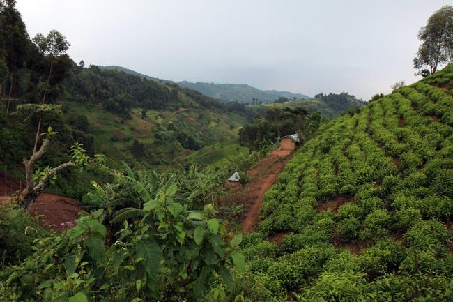 טיול לאוגנדה_247