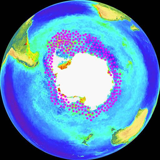 קריל אנטארקטי