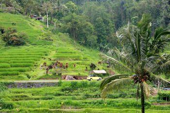 טרסות האורז בג'טילווי