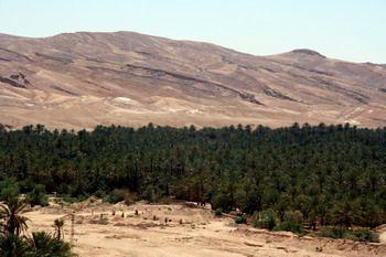 נאת המדבר טמרזה שבתוניסיה