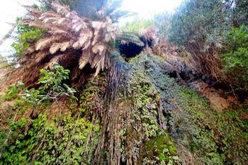 קניון אבן חמאד
