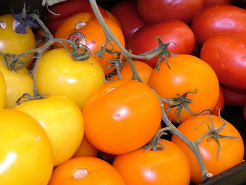 עגבניית הגלאפגוס