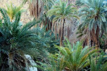שבייקה: תוניסיה
