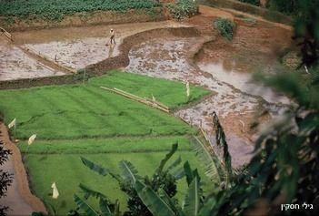 אורז בעמק הזנסקאר