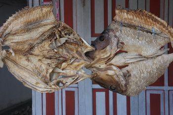 ענף יצוא: דגים מיובשים