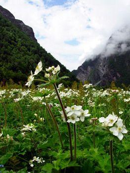 עמק הפרחים