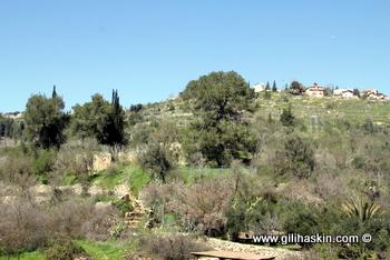 חורבות הכפר קאלוניא