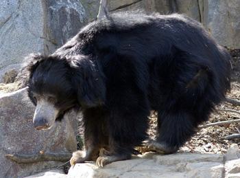 דוב שפתני