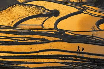 טראסות אורז ביונאן