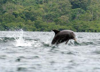 מפרץ הדולפינים