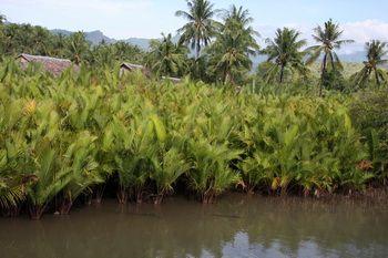 כפרים בוגים לחוף האוקיינוס