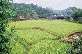 גוויזו (סין)