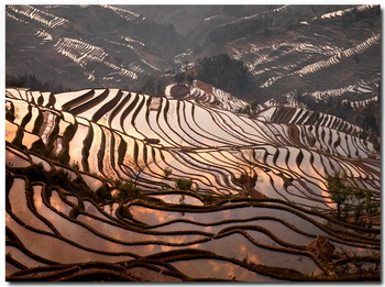 טרסות האורז ביונאן