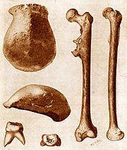 עצמות היררך של איש ג'אווה