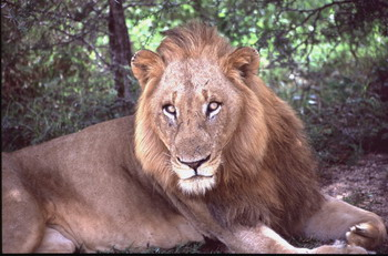 אריה בקרוגר פארק