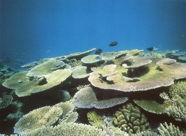 ים סוף