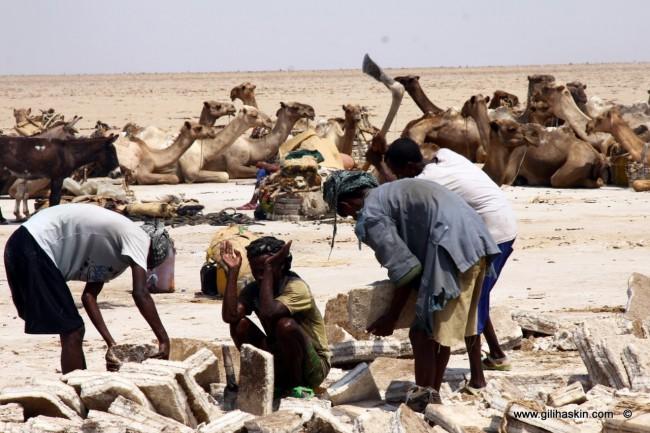 טיול לאתיופיה - כורי המלח במדבר דניקיל