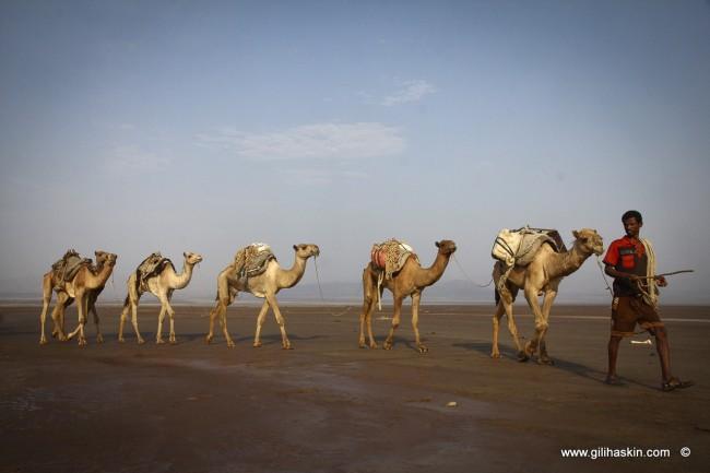 טיול לאתיופיה - שיירת גמלים