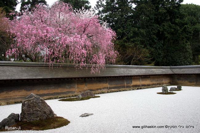 טיול ליפן - גן יפני