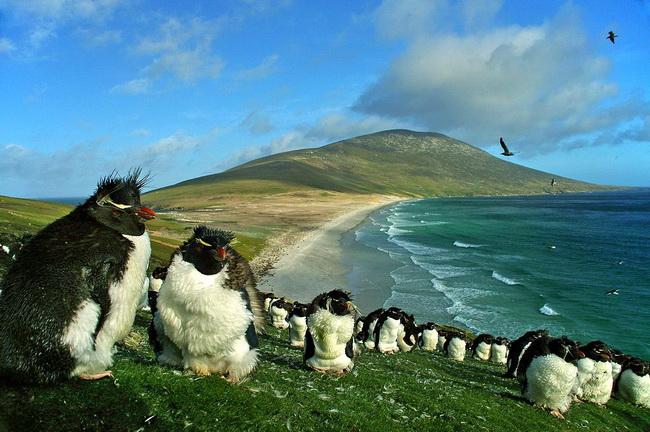 פינגווין הסלעים