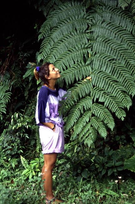 איילת ביער הגשם של הפיליפינים. צילם גילי חסקין ב-1990