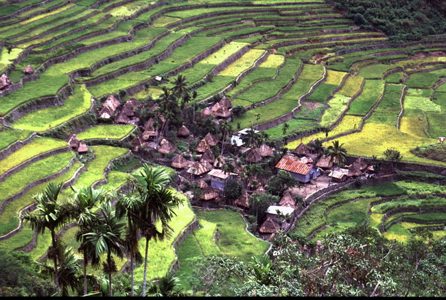 טרסות האורז בפיליפינים. צילום: גילי חסקין