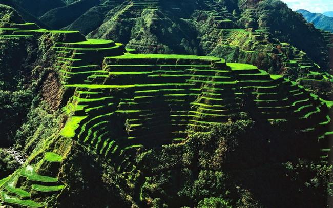 הטרסות של באנאווה. הצילום באדיבות Wikipedia
