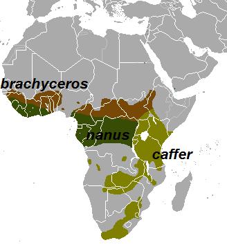 טיול לאפריקה - בופאלו
