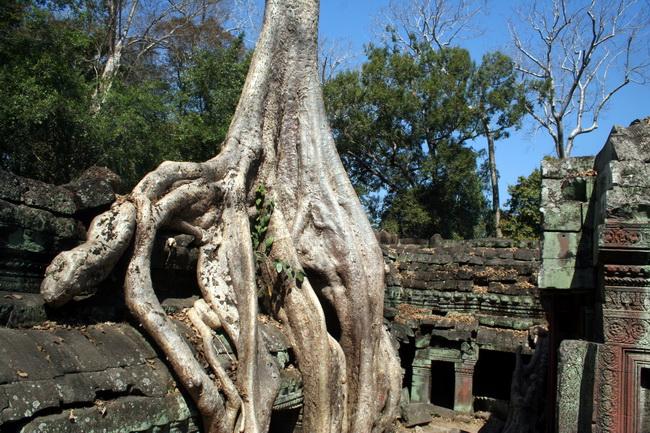 מקדש אנגקור טום. צילום: גילי חסקין