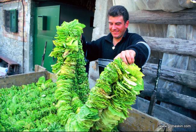 מגדלי טבק בכפריםהפומאקים. צילום: גילי חסקין