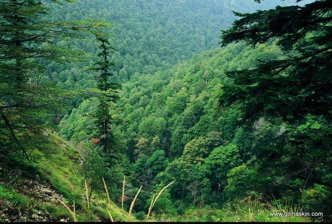 יערות בהרי פירין. צילום : גילי חסקין