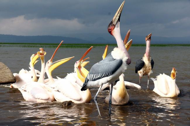 טיול לאתיופיה - אגם אווסה