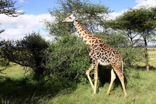 טיול לאפריקה - גי'רף