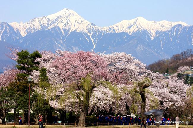 טיול ליפן האלפים היפניים