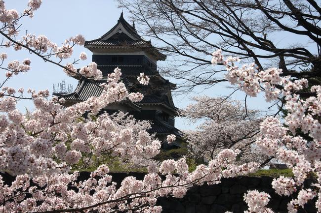 טיול ליפן - פריחת הדובדבן