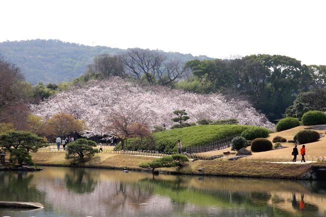 טיול ליפן- פריחת הדובדבן