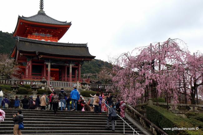 טיול ליפן - קיוטו