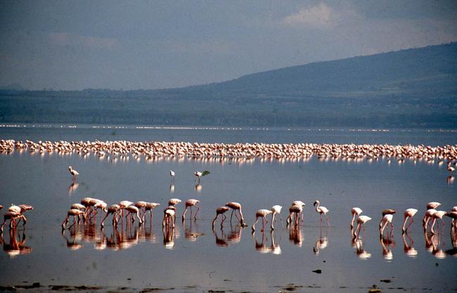 טיול לקניה - אגם נקורו