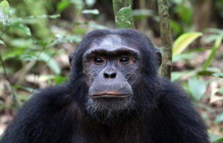מבט על אוגנדה – ארץ שכמעט היתה למולדת