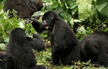 """מבט על אוגנדה: """"שוויץ של אפריקה""""."""