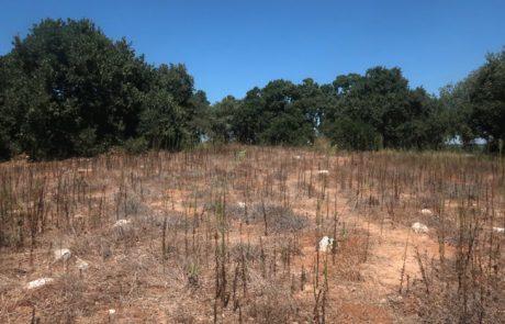 ע'אבת צ'רקס – יער אלונים וסיפורי צ'רקסים בפאתי פרדס חנה