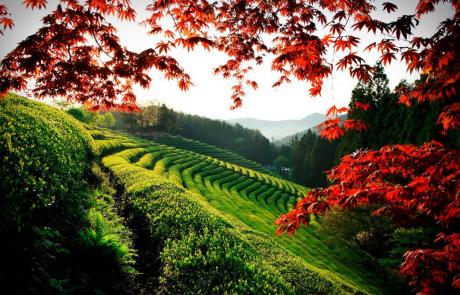 טיול לדרום קוריאה-   אוקטובר -נובמבר  2018
