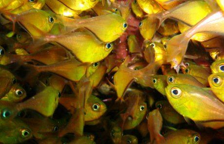 שונית האלמוגים