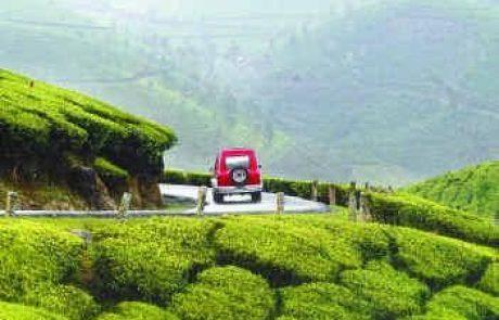 צמח התה, הכנת המשקה והתרבות שמסביבו