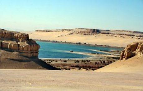 נאת המדבר של אל-פאיום שבמצרים