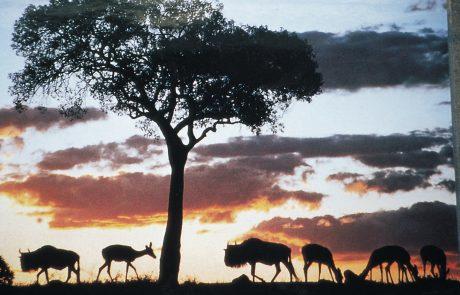 הרצאה על סאפארי באפריקה