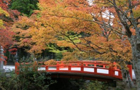 טיול ליפן בתקופת השלכת – אוקטובר 2010
